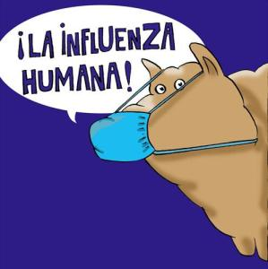 Influenza Humana: Ex porcina